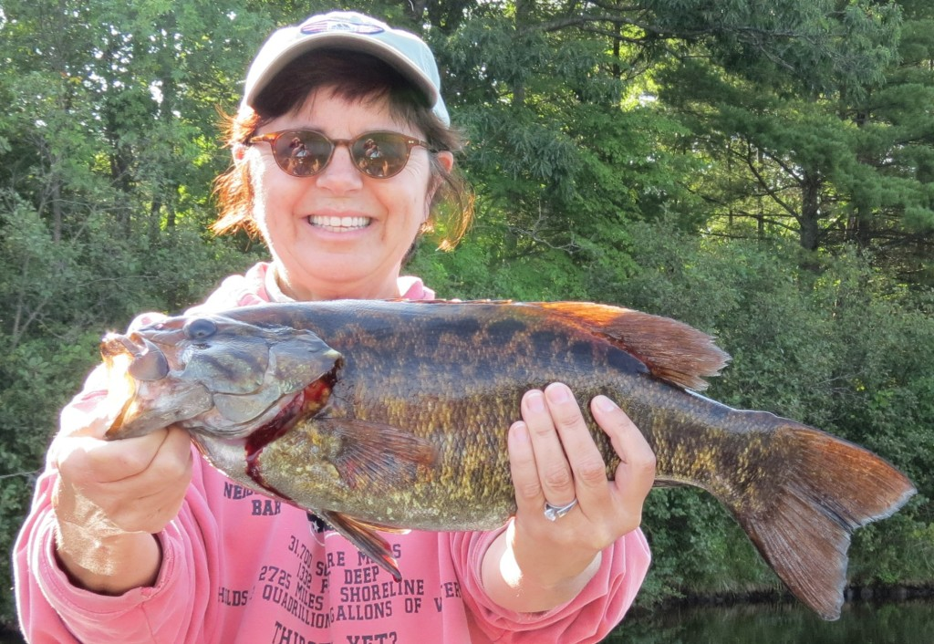 banner fish 1
